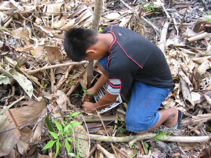 reforestacion-0141